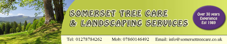 Somerset Tree Care and Landscaping Services